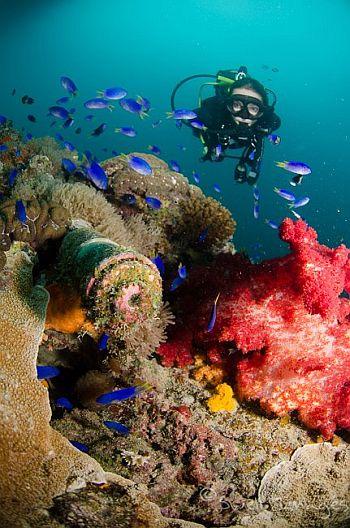 scuba diving writer